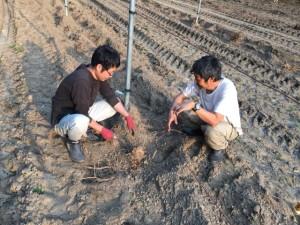 Granjeros japoneses mostrando su cultivo (Es una planta que jamas había visto, se utiliza para hacer cerveza)